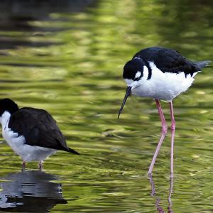 ある日の鳥の写真♪