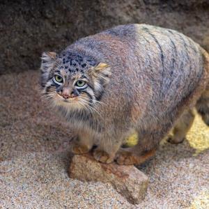 世界最古の猫♪