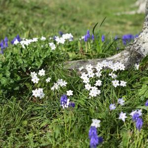 河川敷で見つけた花々♪