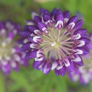 青~紫系の花々♪