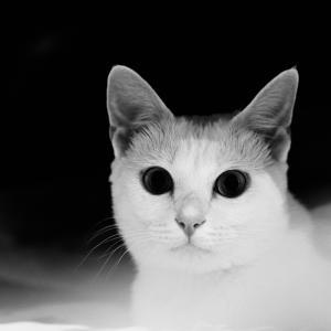 白猫あめ♪