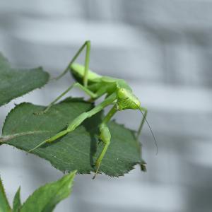 昆虫写真♪