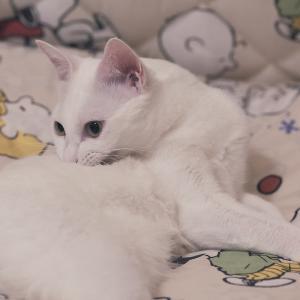 白猫あめをずらずらと♪