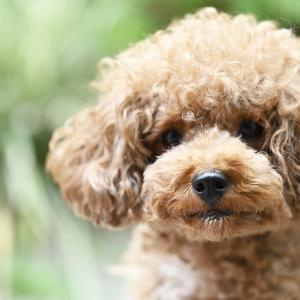 犬の写真♪