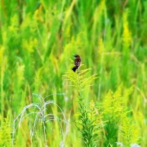 毎日暑くなるけど、季節は確実に秋に・・・・ノビ・ヨシガモそしてミサゴ