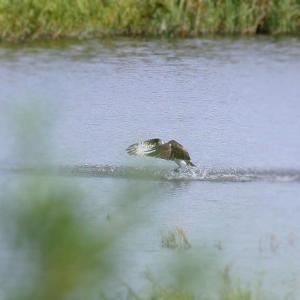 今日もお池で・・・・・小さいのしか捕らない(笑)