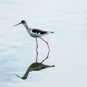 お池は空振り・・・・I沼の水鳥たち