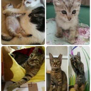 ☆☆新入り猫さん達に新しい家族ができました