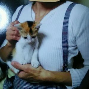 ☆☆生後1ヶ月の三毛ちゃんと10ヶ月の三毛ちゃん