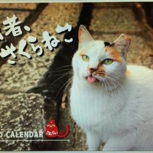 ☆☆「拙者さくらねこ」カレンダー発売中❗