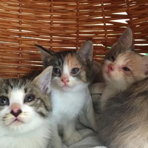 ☆☆保護した赤ちゃん猫達、可愛すぎて仕事できません