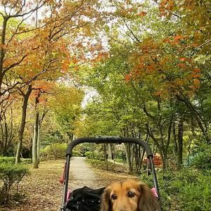 公園の木々も秋色に。。。