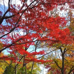 紅葉から落ち葉の季節へ。