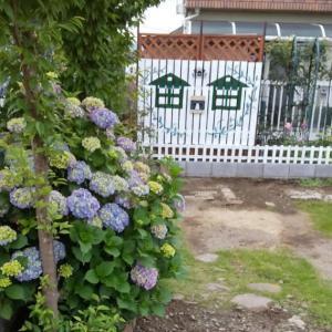庭仕事・・梅雨入り前の草むしり