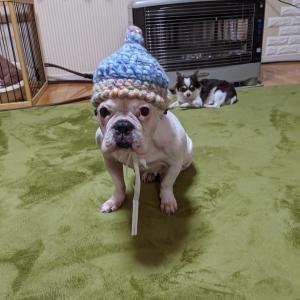 タージマハルみたいな帽子