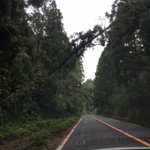【副収入】サラリーマン投資家が始めた太陽光!台風15号によるキャッシュフローへの影響は?