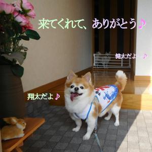 散歩 7月25日の5選+α写真♪