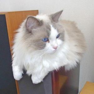 猫と関係ない話