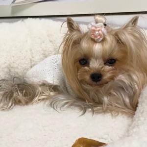 犬をダメにすると噂のニトリのベッド