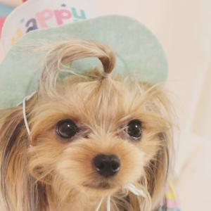 桜ちゃん、2歳になりました