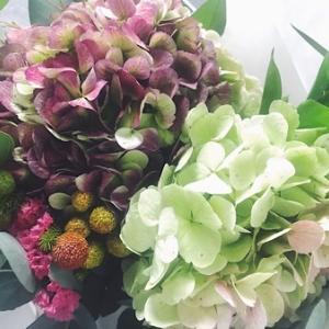 シックで大きなコロンビアのアジサイにうっとり☆世界の花屋のお花定期便