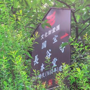 奈良長谷寺の紫陽花