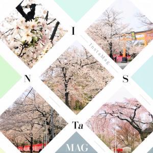 桜 ~綺麗に華やかに~