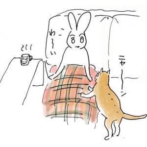 猫暮らしあるある…