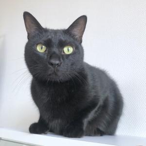 黒猫さんの置物?!