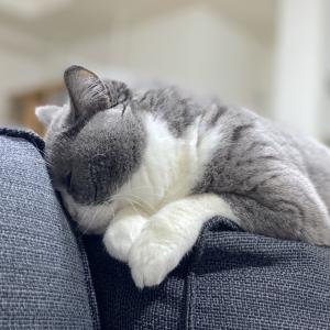 おやすみ梅子さんとおまけ梅子さん