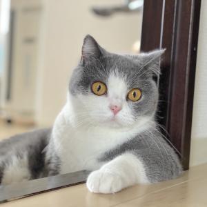 優雅に見張られてる梅子さん