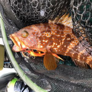 ボウズからの連日カヤック釣行-新潟県柏崎-タイラバ