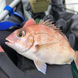 魚種も数も釣れたけど…サイズはイマイチ…。-新潟県上越-カヤックフィッシング