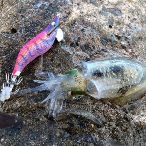 日中の釣りは本当にキツイ…。-新潟県柏崎-エギング