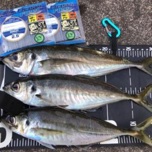 久しぶりの入れ食い、まだまだ尺アジ釣れますね♪-新潟県柏崎-アジング