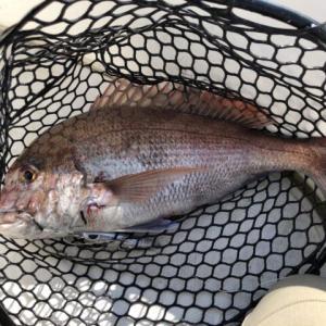 沖には魚が沢山いました♪-新潟県柏崎-オフショアジギング