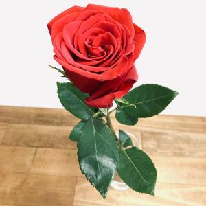 亡き母の誕生日にバラの花を