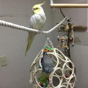 鳥部屋の子達の放鳥