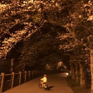 桜と・・・・