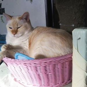 隙間時間、保護猫カフェ。