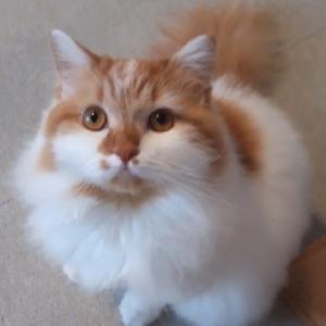 猫たちの紹介。