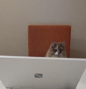 オンライン会議×猫。