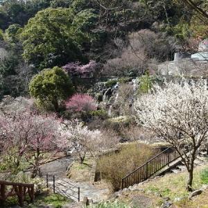 河津桜と車中泊 ②