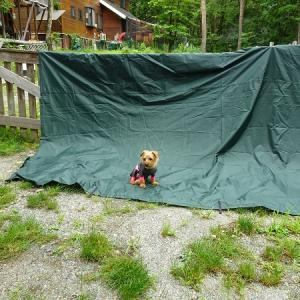 白馬のんびりキャンプ