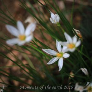 美しき自然の花 EOS RP EF50mmF1.8