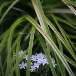 草の中の花 EOSRP EF50mm