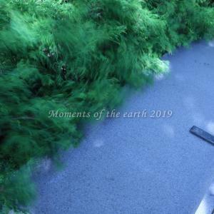 強風のベンチ EOSRP RF35mm