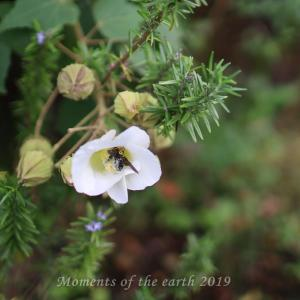 花と蜂 EOSRP EF35㎜F1.4L