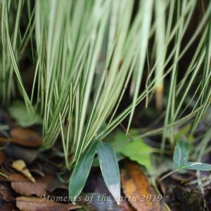 草と落ち葉 EOSRP EF35㎜F1.4L
