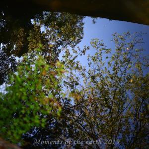 池に映る黄葉 CANON EOS RP RF35mmF1.8